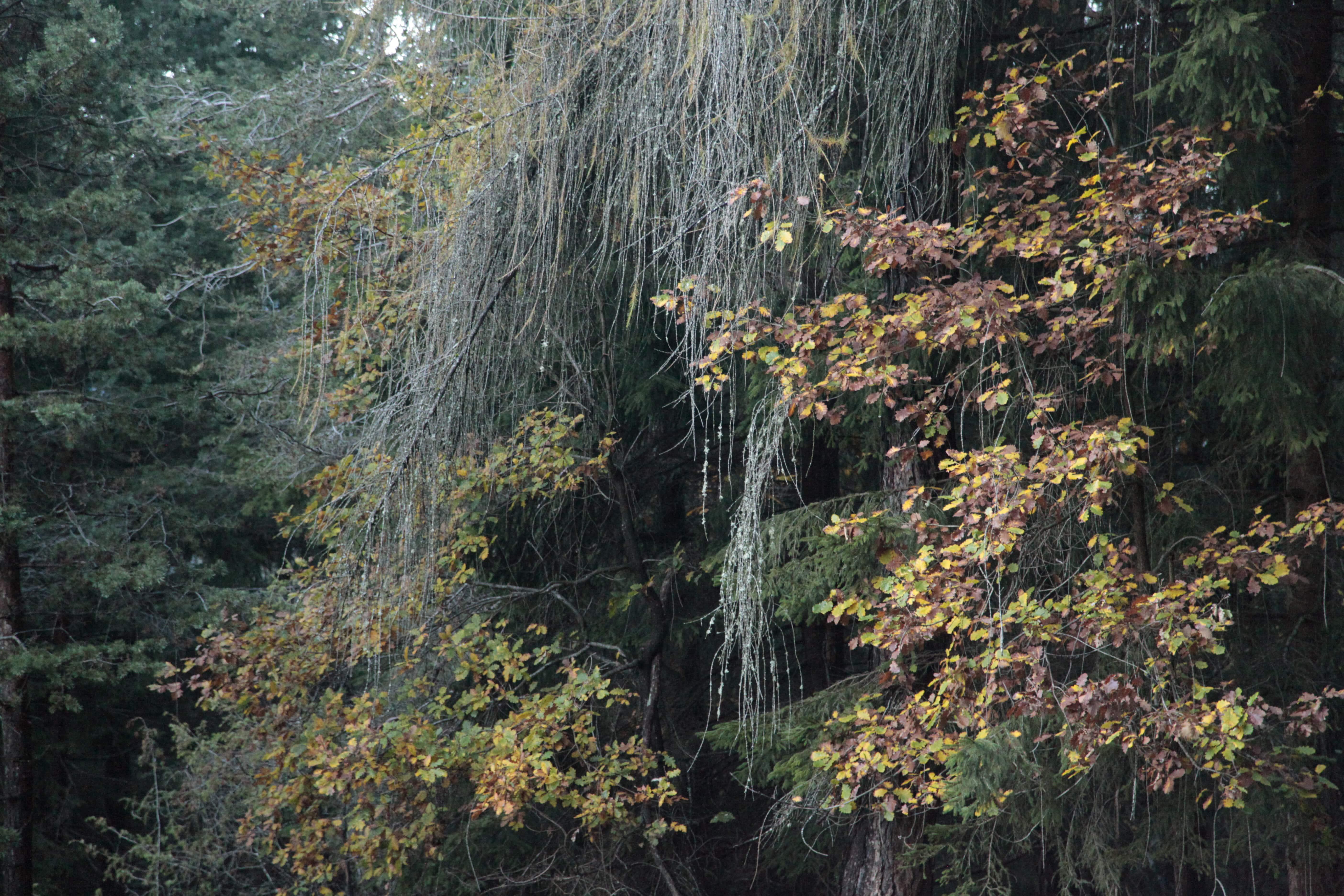 Autumn Poetry 01