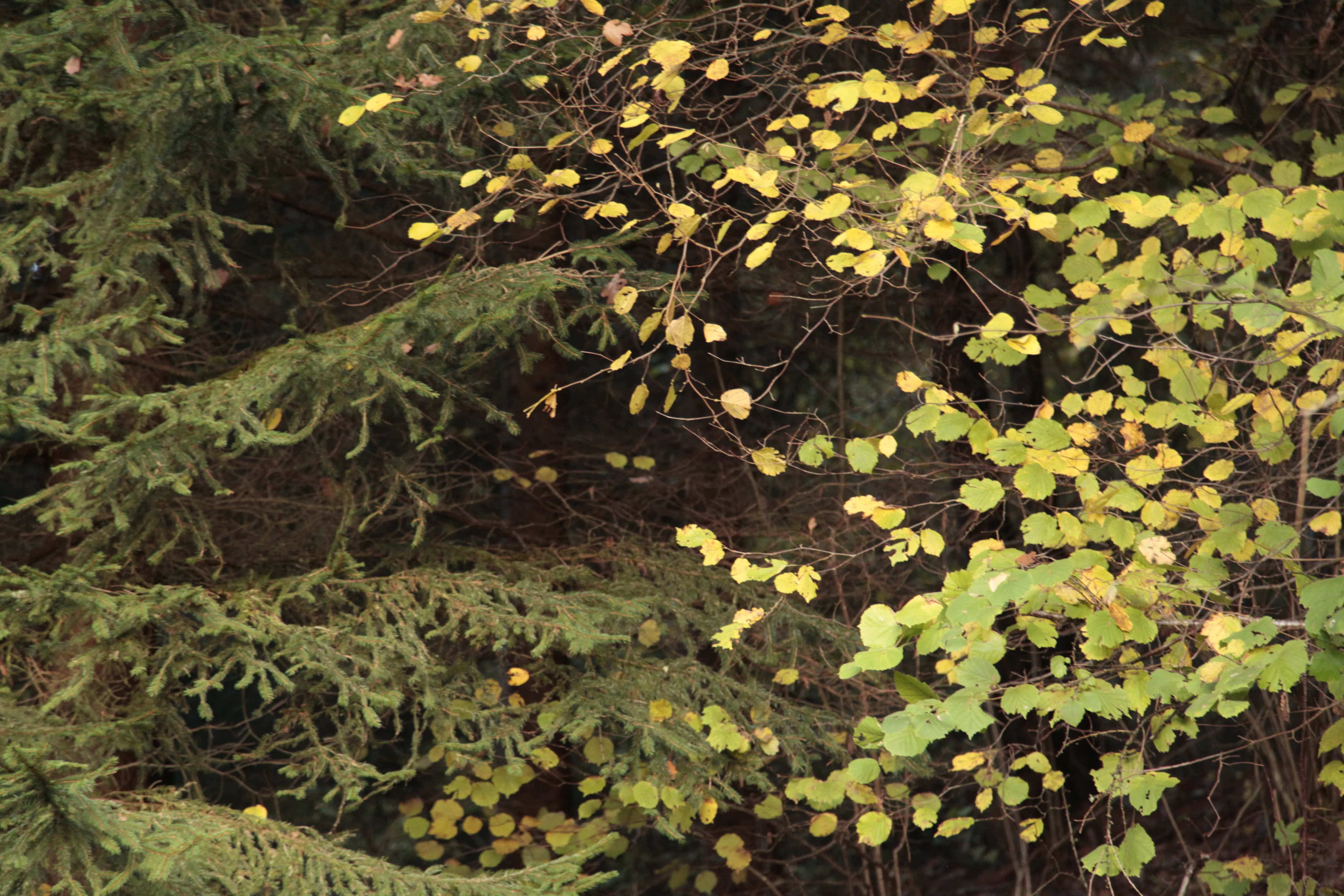 Autumn Poetry 02