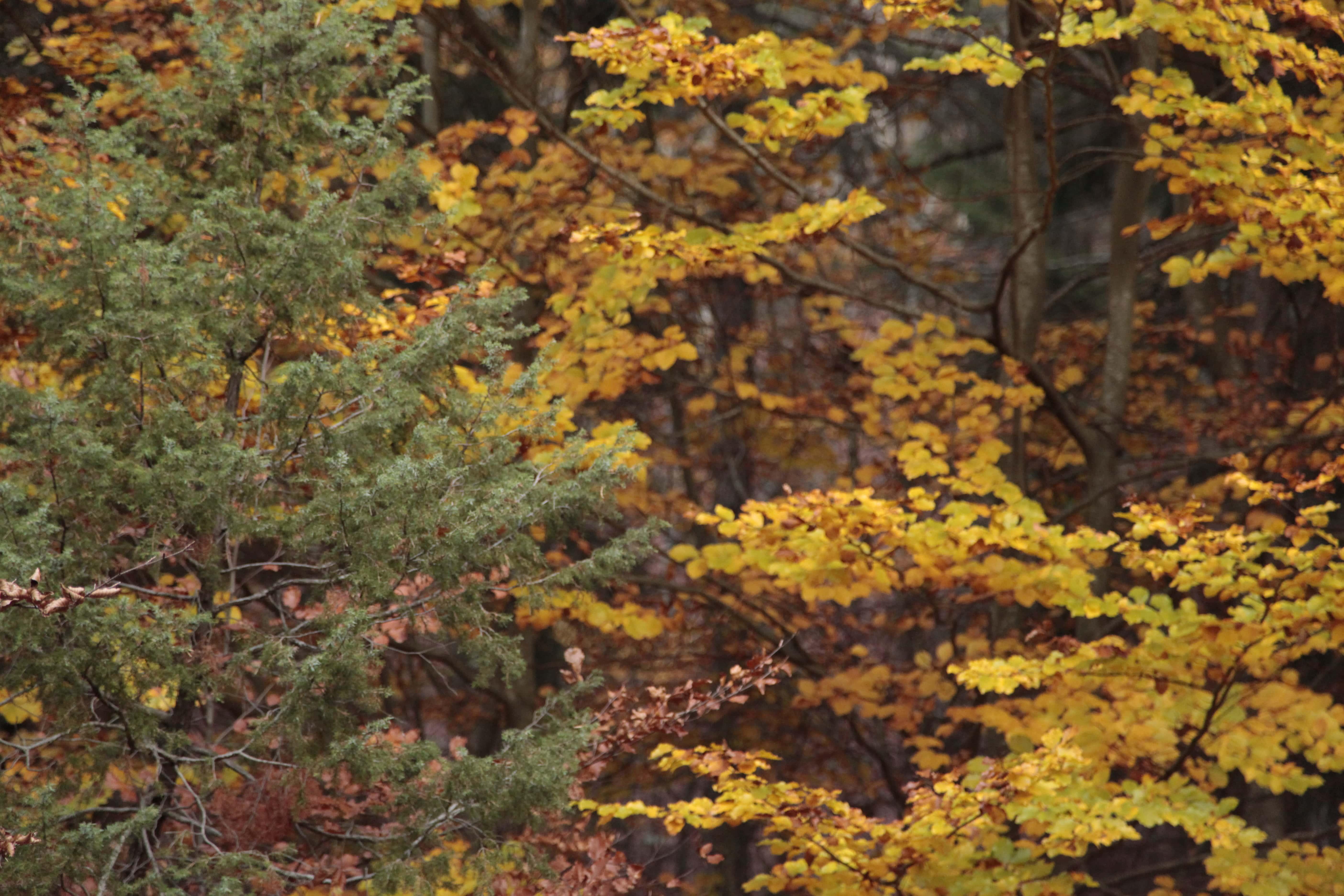 Autumn Poetry 03