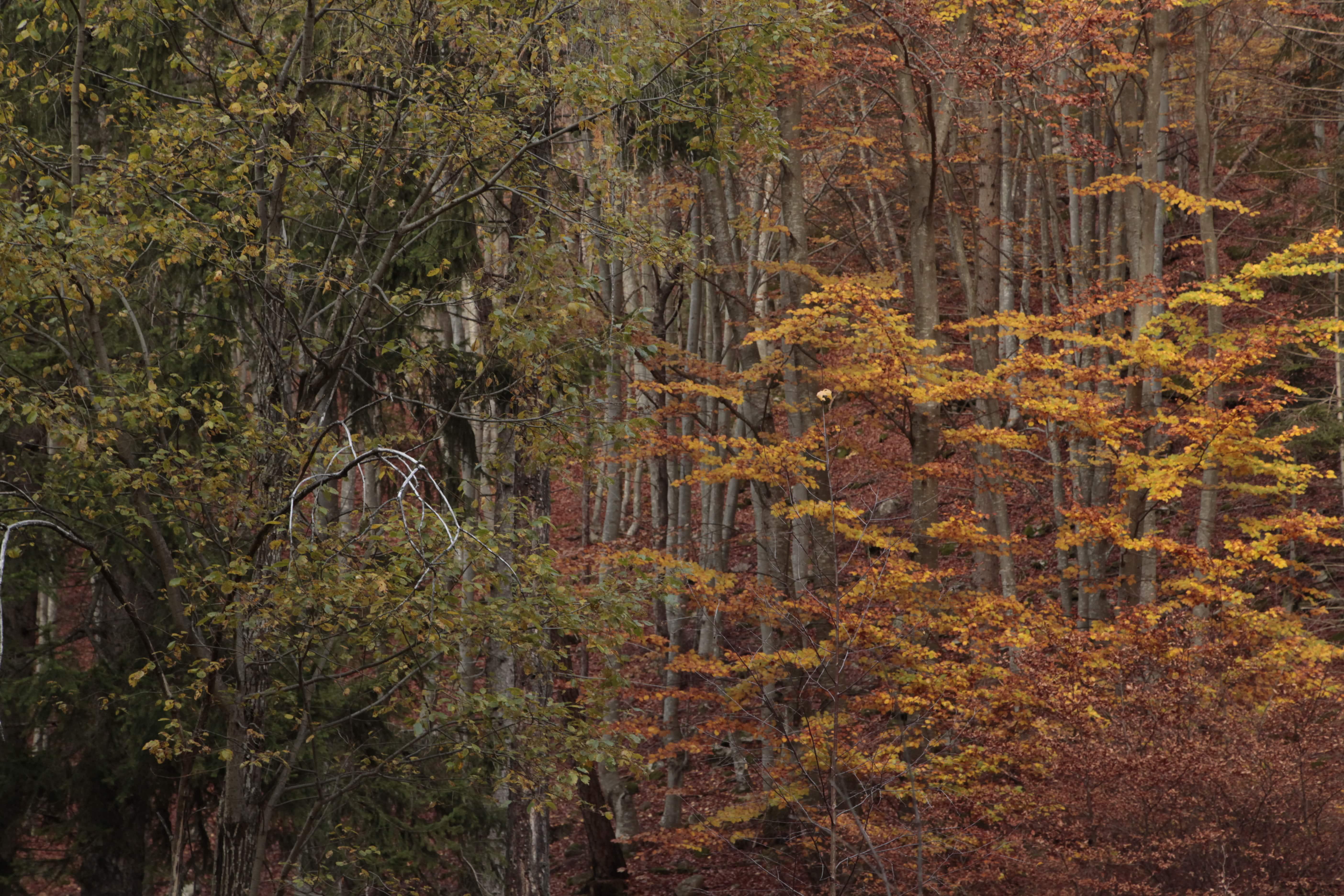 Autumn Poetry 04