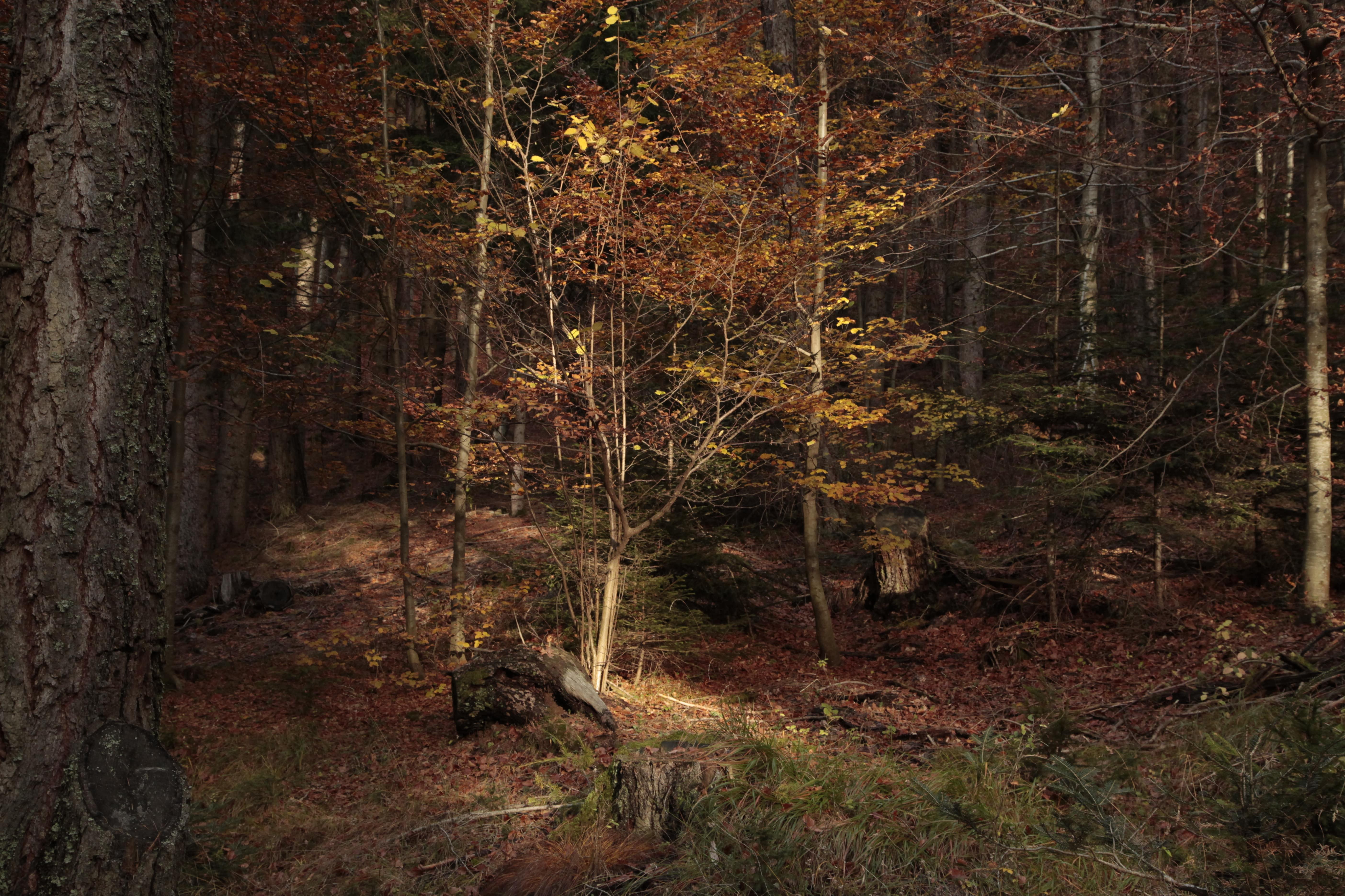 Autumn Poetry 05